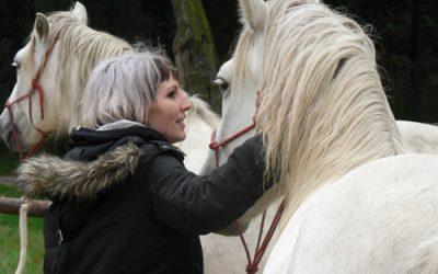 3 Dinge, die du von Pferden über Gefühle lernen kannst