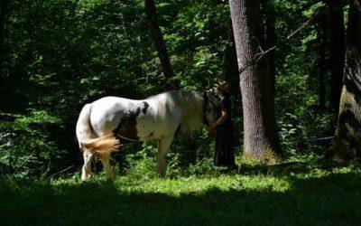 Das spirituelle Bewusstsein der Pferde