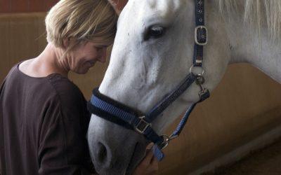 Nur die Liebe heilt – Wie Pferde gesund werden