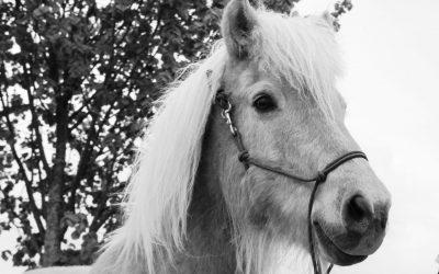 Der wahre Reitlehrer ist das Pferd