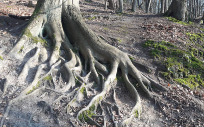 4 Ideen, wie du in Krisenzeiten Kraft in der Natur findest